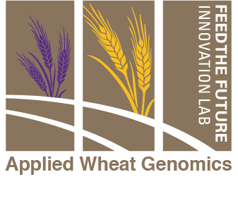Wheat USAID